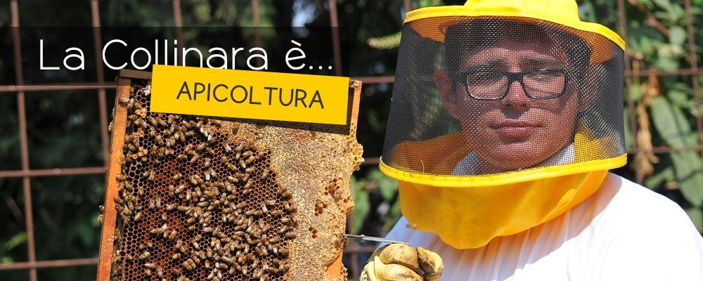 lacollinara_apicoltura